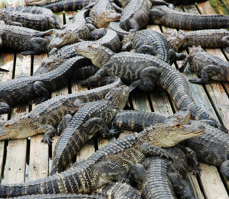 Gatorland One