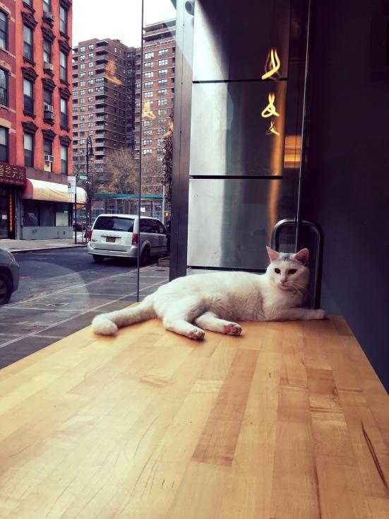 Meow Parlour Three