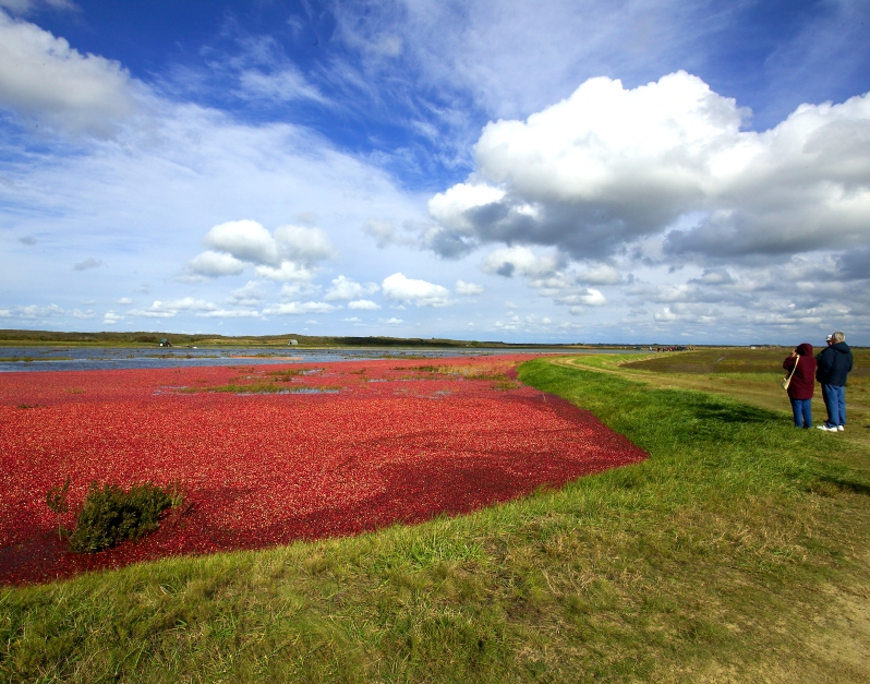NANTUCKET CRANBERRY BOG credit J. Greg Hinson